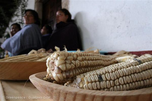 GMO-free corn in Mexico