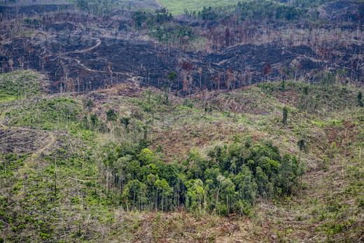 Deforestated land in Tesso Nilo National Park,