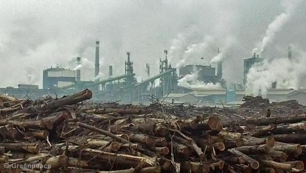 Stockpiles of rainforest logs at APP's Indah Kiat Perawang pulp mill.