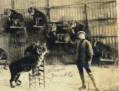 Mabel Stark and her tamed tigers. Early 20th Century