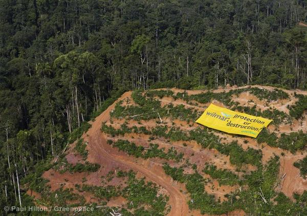 Banner at Wilmar Palm Oil Concession in Sumatraia