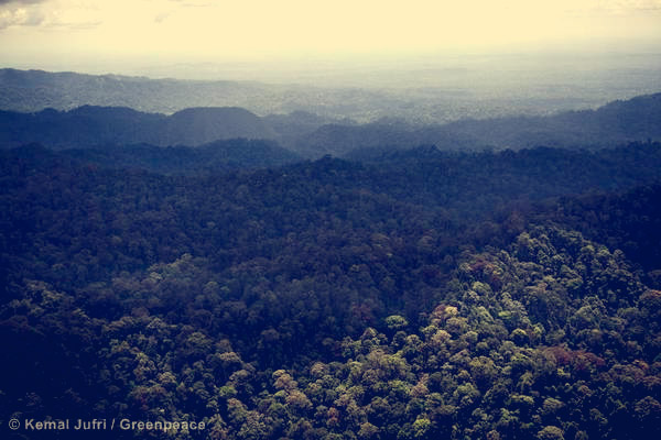 Healthy forest in Bukit Tigapuluh National Conservation Area in Jambi province.