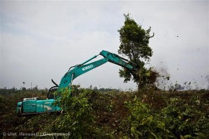 Forest Destruction in Indonesia