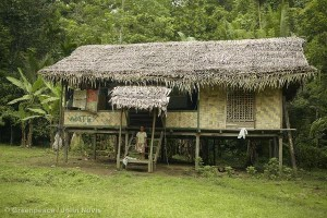 Awane Community Dwelling in Papua New Guinea