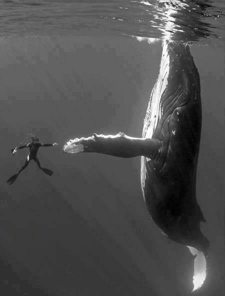High five a Humpback!