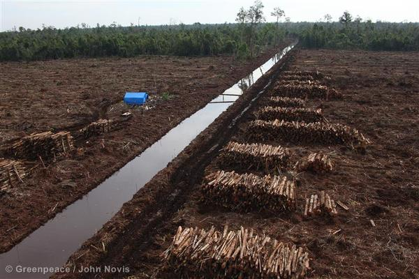 Forests Destruction in Indonesia