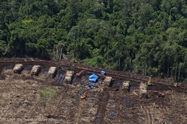 APRIL Pulpwood Concession in Sumatra