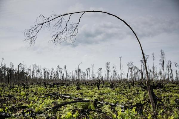 Peatland Forest Clearance in Riau