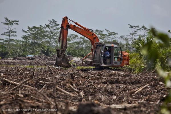 An excavator clears forest for oil palms near a national park in Indonesia.