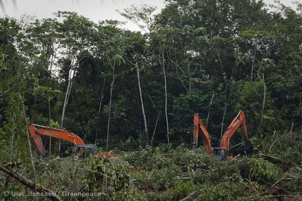 Excavators clear forest inside a palm oil concession