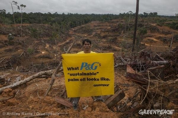 A Greenpeace activist holds a banner inside palm oil consession owned by PT Multi Persada Gatramegah (PT MPG), a subsidiary of Musim Mas company, a palm oil supplier to Procter and Gamble in Muara Teweh, North Barito, Central Kalimantan.
