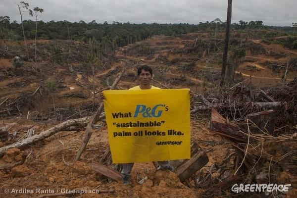 A Greenpeace activist holds a banner inside the palm oil concession of a palm oil supplier to Procter and Gamble.