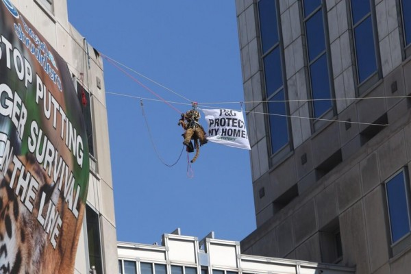 A Greenpeace activist dressed in a tiger costume suspended on a zipline between P&G's headquarters in Cincinnati.
