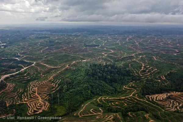 Destruction of rainforest habitat