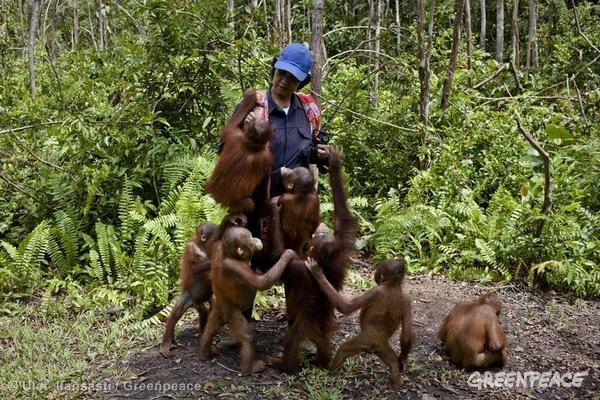 Baby orangutans at the Orangutan Foundation International Care Center in Pangkalan Bun, Central Kalimantan, Indonesia.