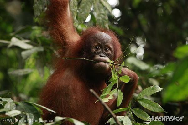 orangbaby