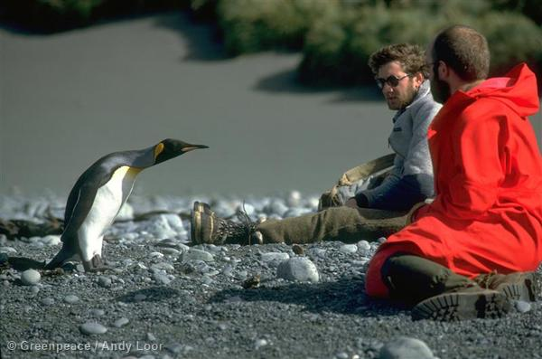 Greenpeace meets King Penguin on Antarctica