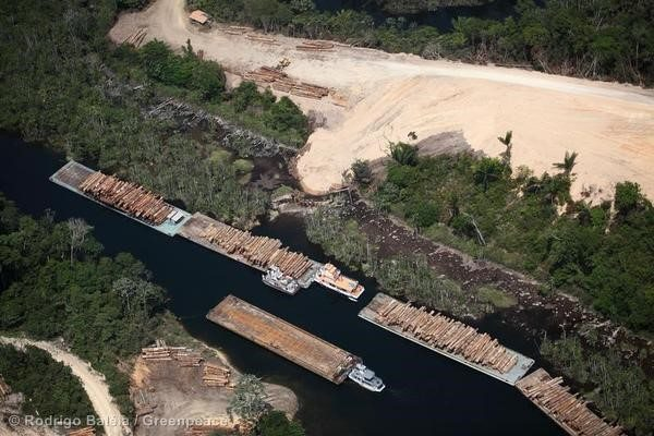 Barges loaded with timber in the tropical rainforest of Para state.