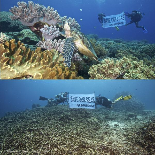 Divers from Silliman University, Coastal Conservation and Education foundation and Greenpeace survey the massive coral damage in Apo Island caused by unprecedented and extreme weather events. The top photo shows healthy coral, while the bottom photo shows damaged and dead coral, both taken at Apo Island, Dauin Negros Oriental.