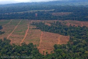 Aerial image of the oil palm nursery managed by Herakles Farms.