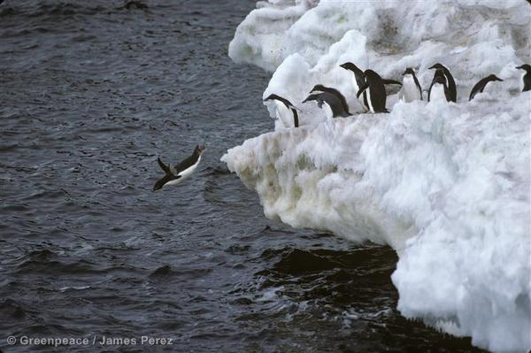 Penguins in Antarctic waters.