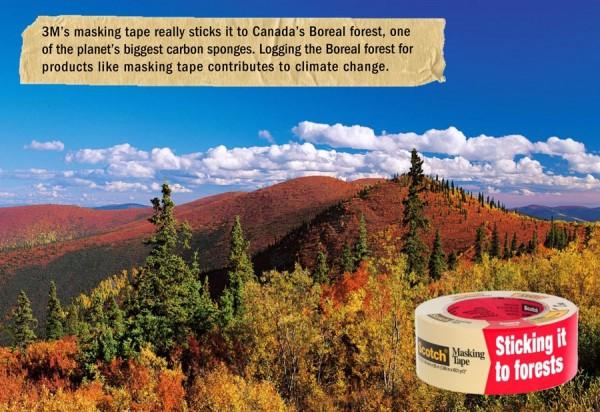Infographic boreal