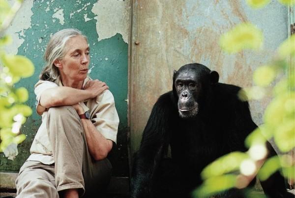 Photo  Michael Neugebauer courtesy of Jane Goodall Institute
