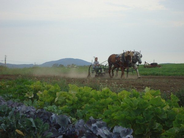 Ah Vermont. Working the land at Sterling College. Photo courtesy of Devin Thurber.