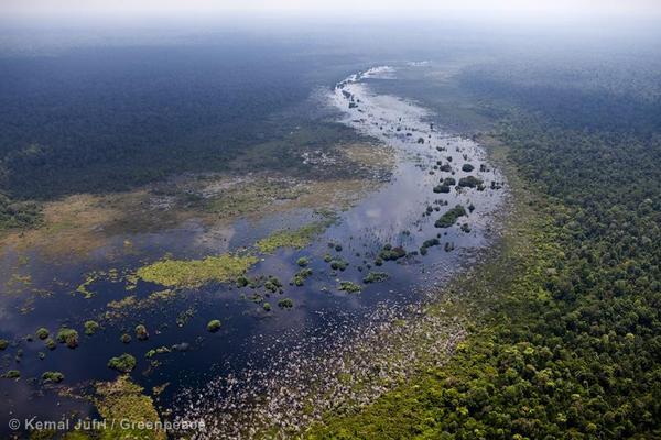 Peat Swamp Forest in Sumatra