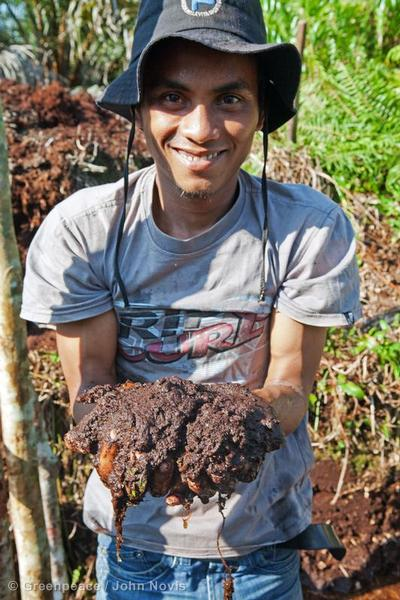 A palm oil worker holds peat