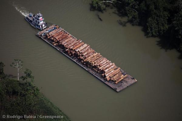 A barge loaded with timber in Para state. The top image of this post also depicts logging operations in Para.