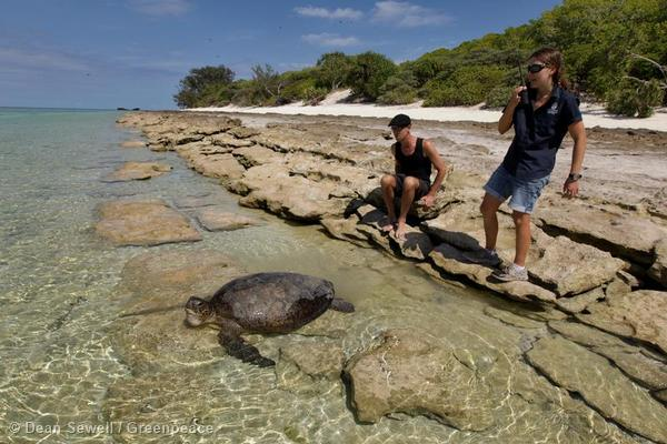The release of a green turtle that became trapped in the trees while trying to lay her eggs overnight. The rescue was performed by Greenpeace's Esperanza captain Mike Finken and Cathy, a Heron Island research scientist.