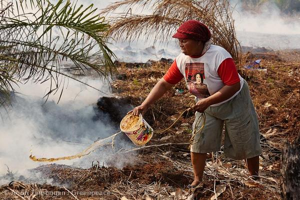 A villager tries to douse a smouldering peatland fire which burnt over 30 hectares of land at Selinsing Village, Riau. Those fires were linked to the clearance of peatland for palm oil.