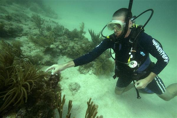 John Hocevar, marine biologist and Greenpeace USA Oceans Campaign Director, assesses soft corals near Looe Key to assess the impacts of both oil and chemical dispersants on the Gulf ecosystem in the aftermath of the BP Deepwater oil spill.