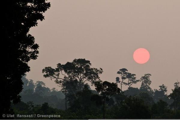 Sunset in Kalimantan