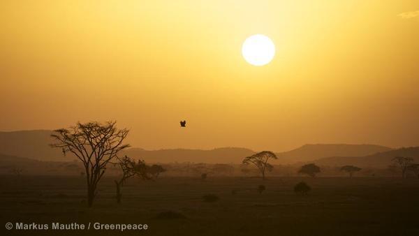Sunset in the Savanna in Tanzania Landschaft in der Savanne