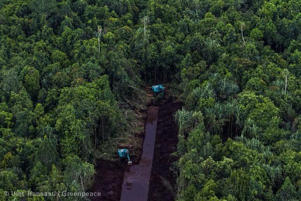 Canal construction through peatland forest inside a PT. Riau Andalan Pulp & Paper (PT RAPP) pulpwood concession in Riau Province. PT RAPP is a subsidiary of APRIL, the pulp & paper division of the RGE Group. On 28 January 2014, APRIL announced that it intends to continue to use rainforest logs until at least 2020.