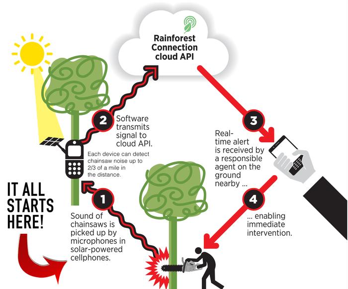 Rainforest Connection infographic