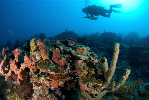Alacranes Reef  in the Gulf of Mexico.