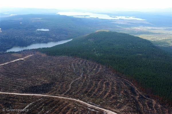 Clear-cut Region of Boreal Forest