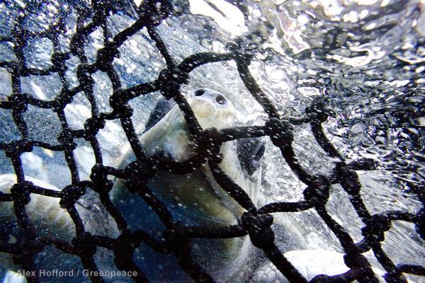 Turtle in East Pacific Ocean