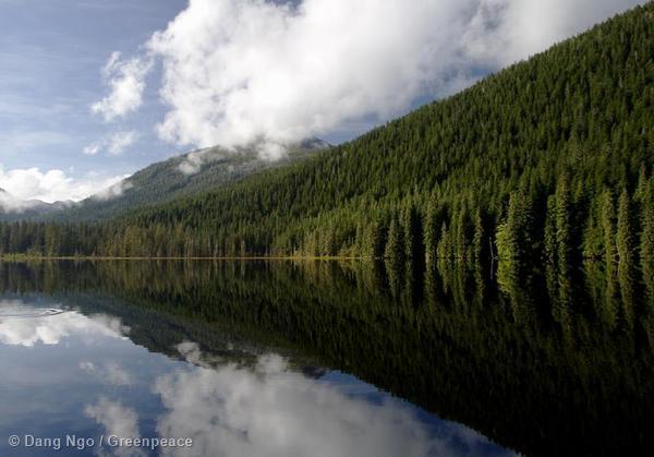 Trees along Salmon Lake