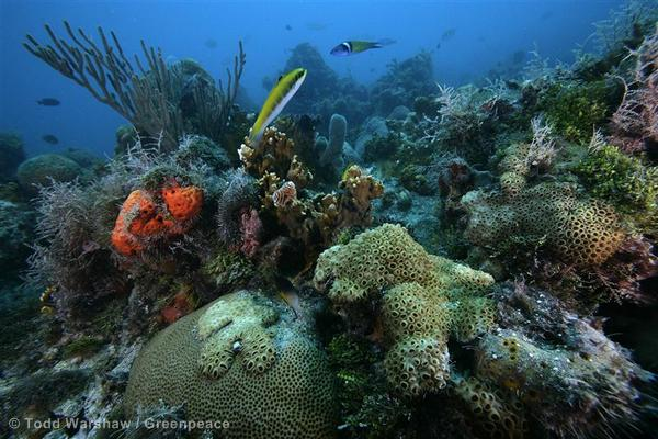 Underwater Life in Dry Tortugas