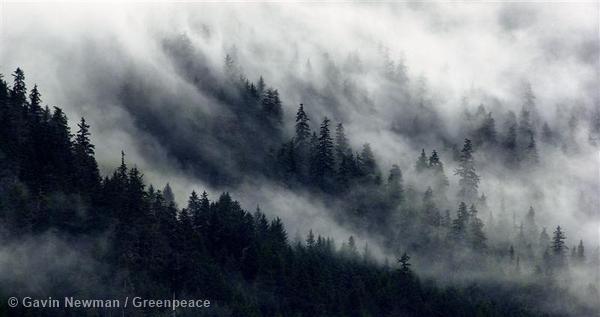 Forests Background Documentation Alaska (USA : 2003)
