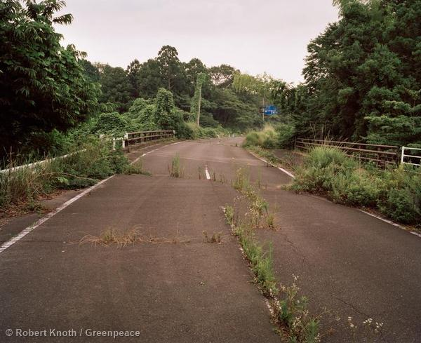 Fukushima Forests Summer 2014