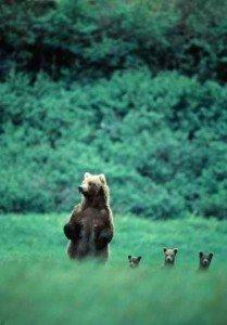 bear mom