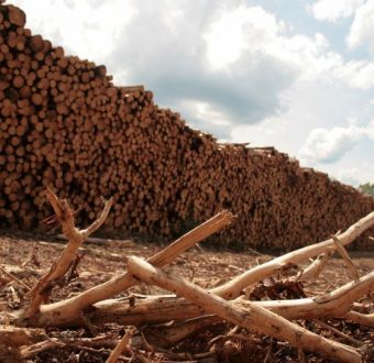 Clear cut logging in Canada's Boreal forest. © Nicolas Mainville / Greenpeace.