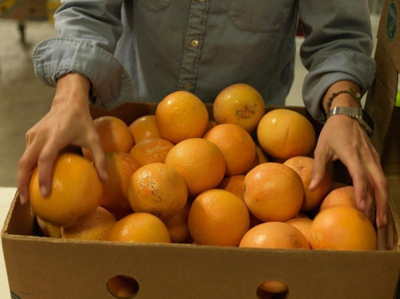 Sustainable Agriculture (Oranges)