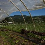 Eco-Farming
