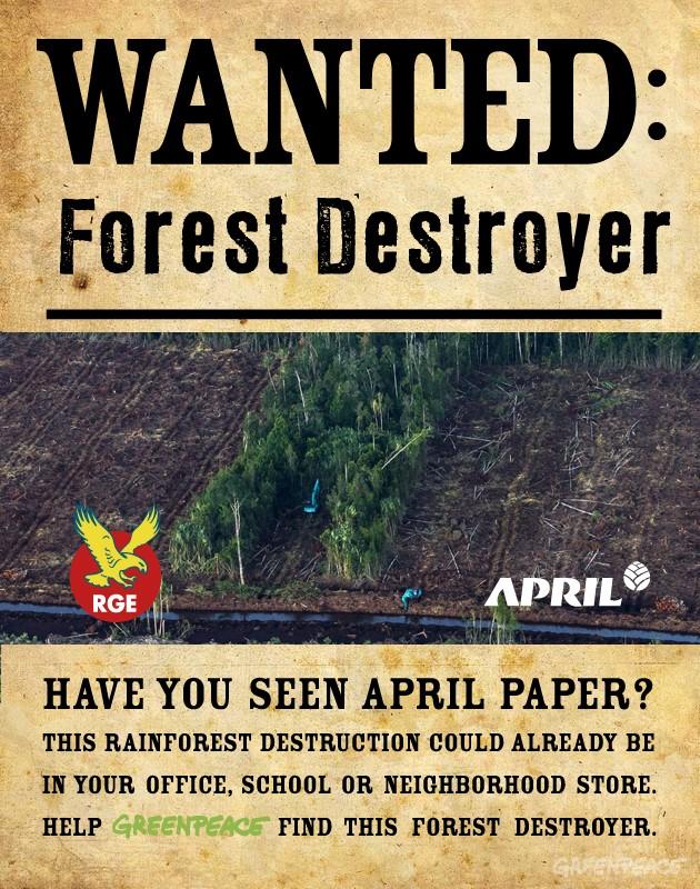 rainforest deforestation research paper